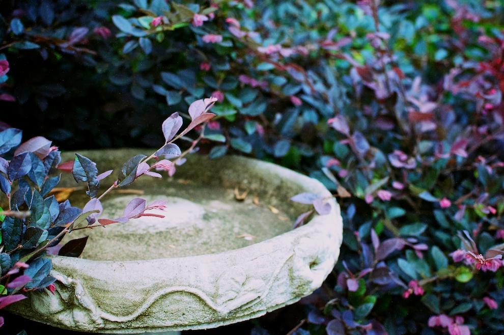 Springtime Garden