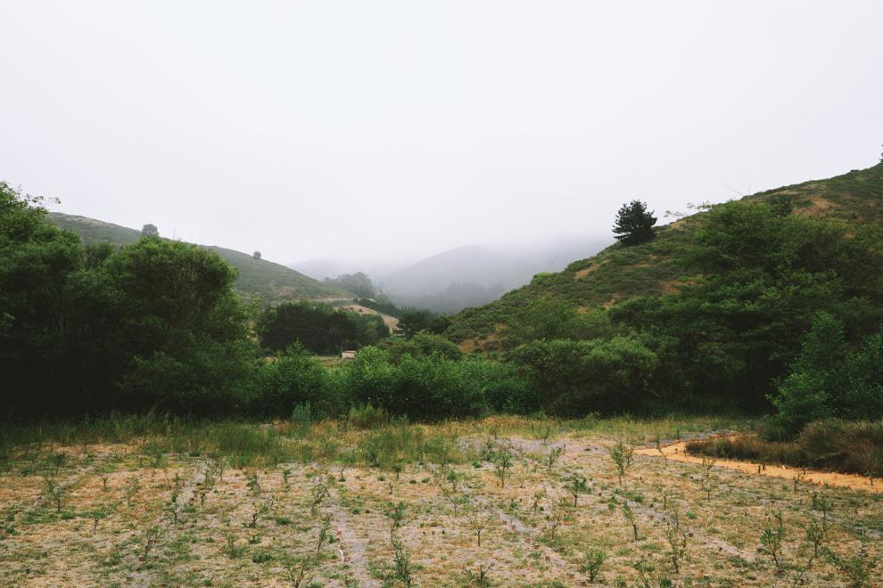 Muir Woods Fog